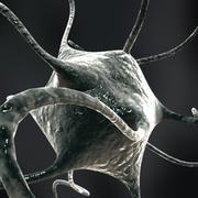 нейрон 3d model