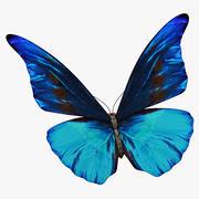 Butterfly 6 3d model
