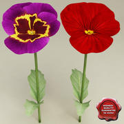 Pansy Collection 3d model