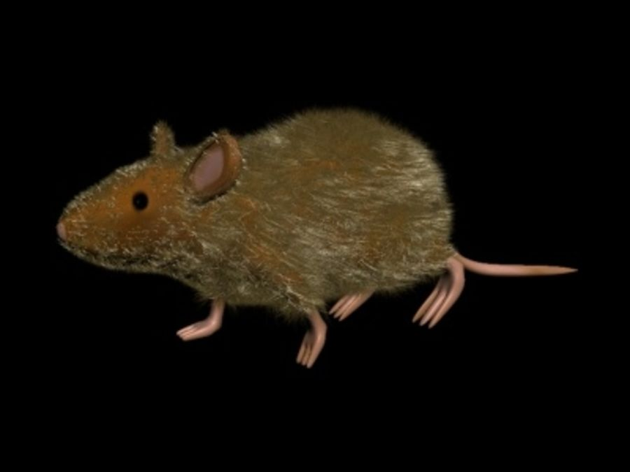 Ratte3.max royalty-free 3d model - Preview no. 4