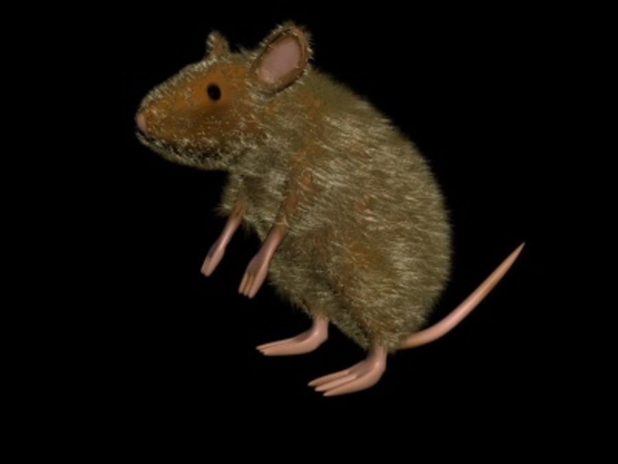 Ratte3.max royalty-free 3d model - Preview no. 5