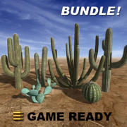 Low Poly - Cactus Bundle 3d model
