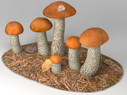 Orange Birch Bolete 3d model