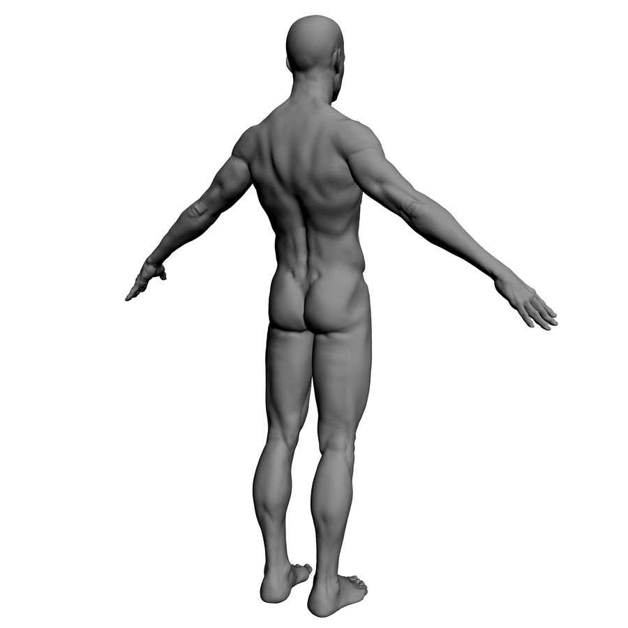 Bruce royalty-free 3d model - Preview no. 5