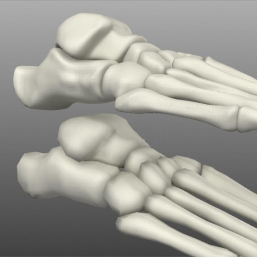 Huesos del pie humano royalty-free modelo 3d - Preview no. 4