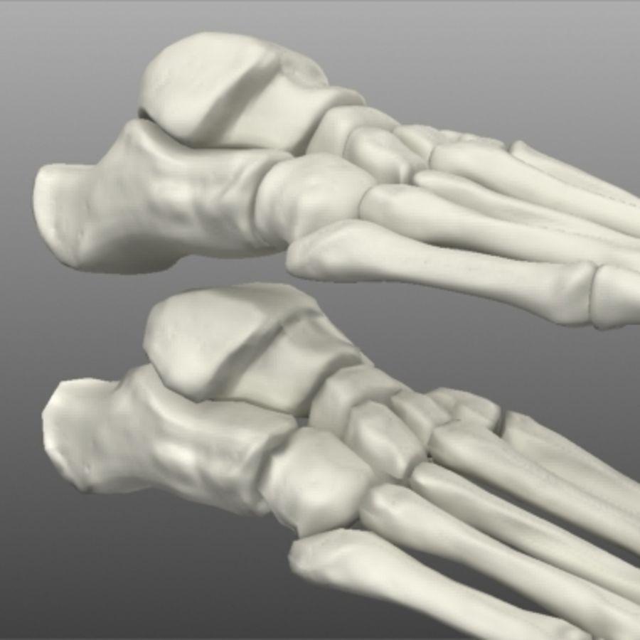 Huesos del pie humano royalty-free modelo 3d - Preview no. 5