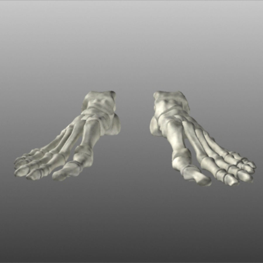 Huesos del pie humano royalty-free modelo 3d - Preview no. 14