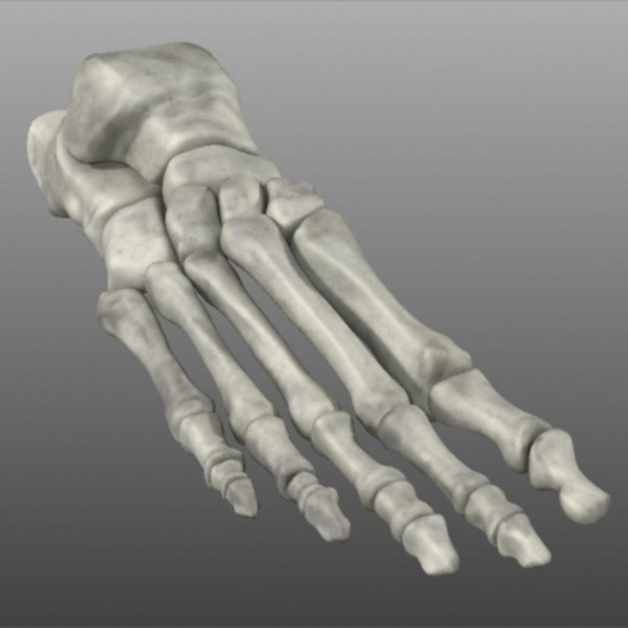 Huesos del pie humano royalty-free modelo 3d - Preview no. 12