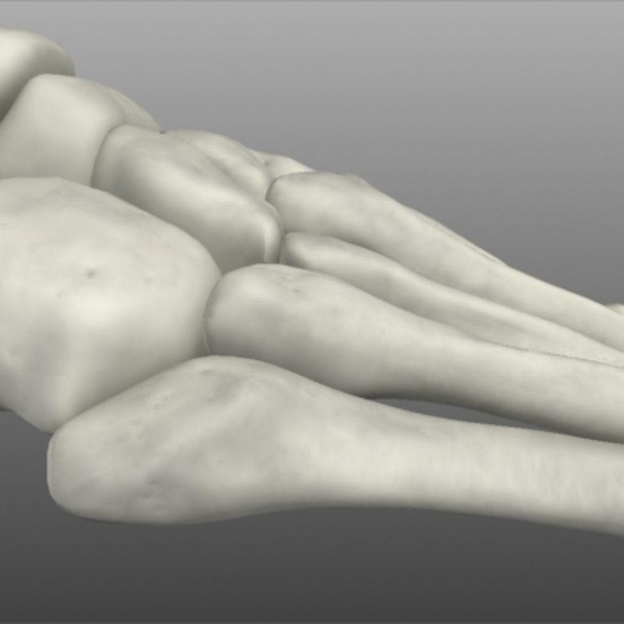 Huesos del pie humano royalty-free modelo 3d - Preview no. 9