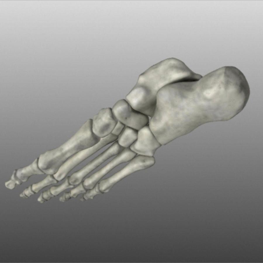 Huesos del pie humano royalty-free modelo 3d - Preview no. 7