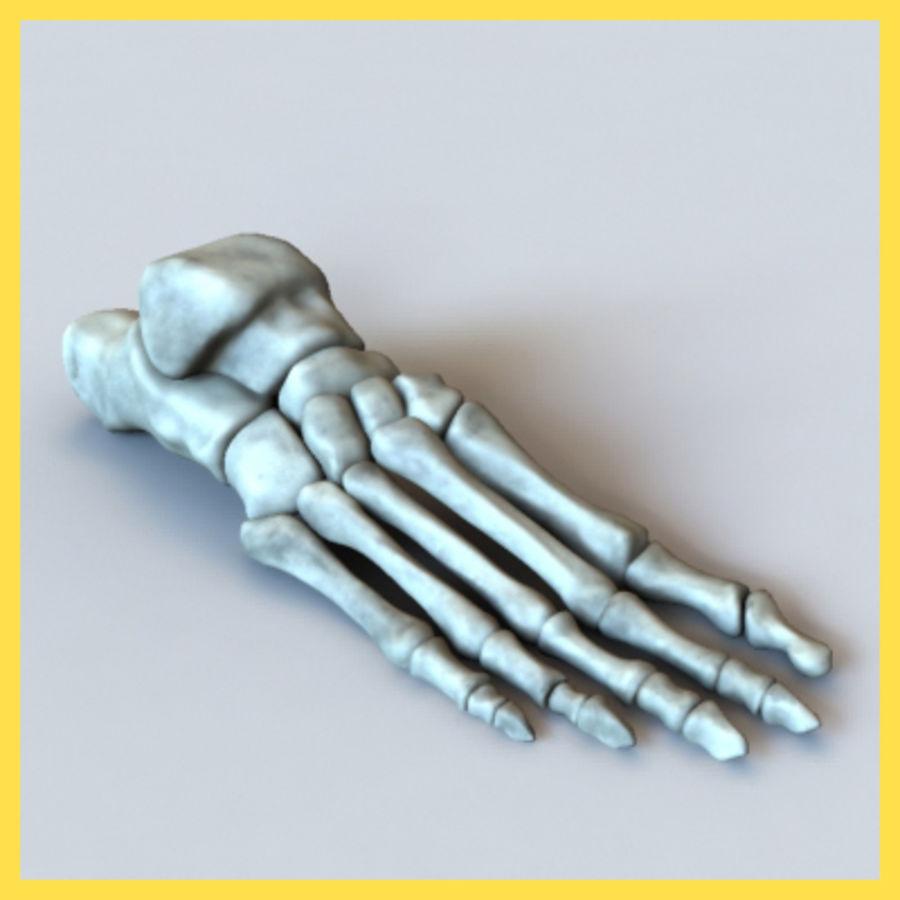 Huesos del pie humano royalty-free modelo 3d - Preview no. 1