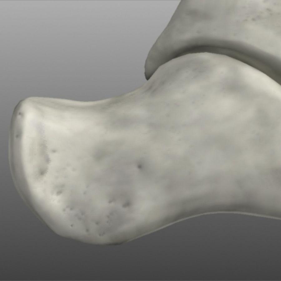 Huesos del pie humano royalty-free modelo 3d - Preview no. 8