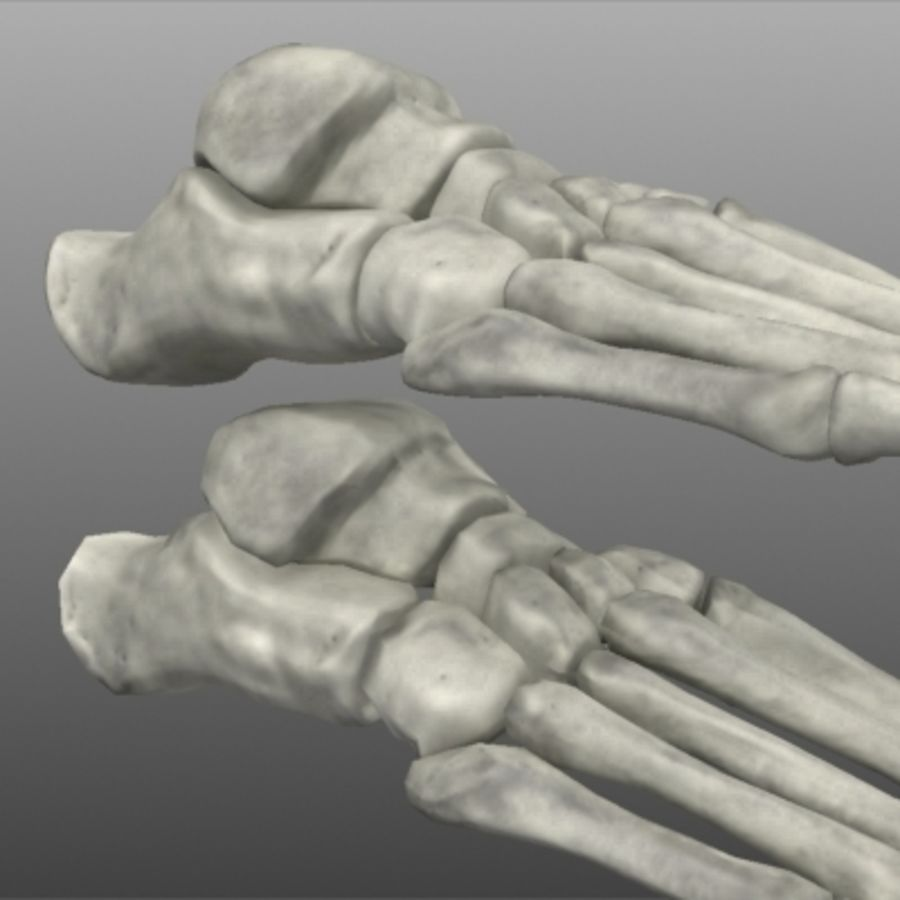Huesos del pie humano royalty-free modelo 3d - Preview no. 6