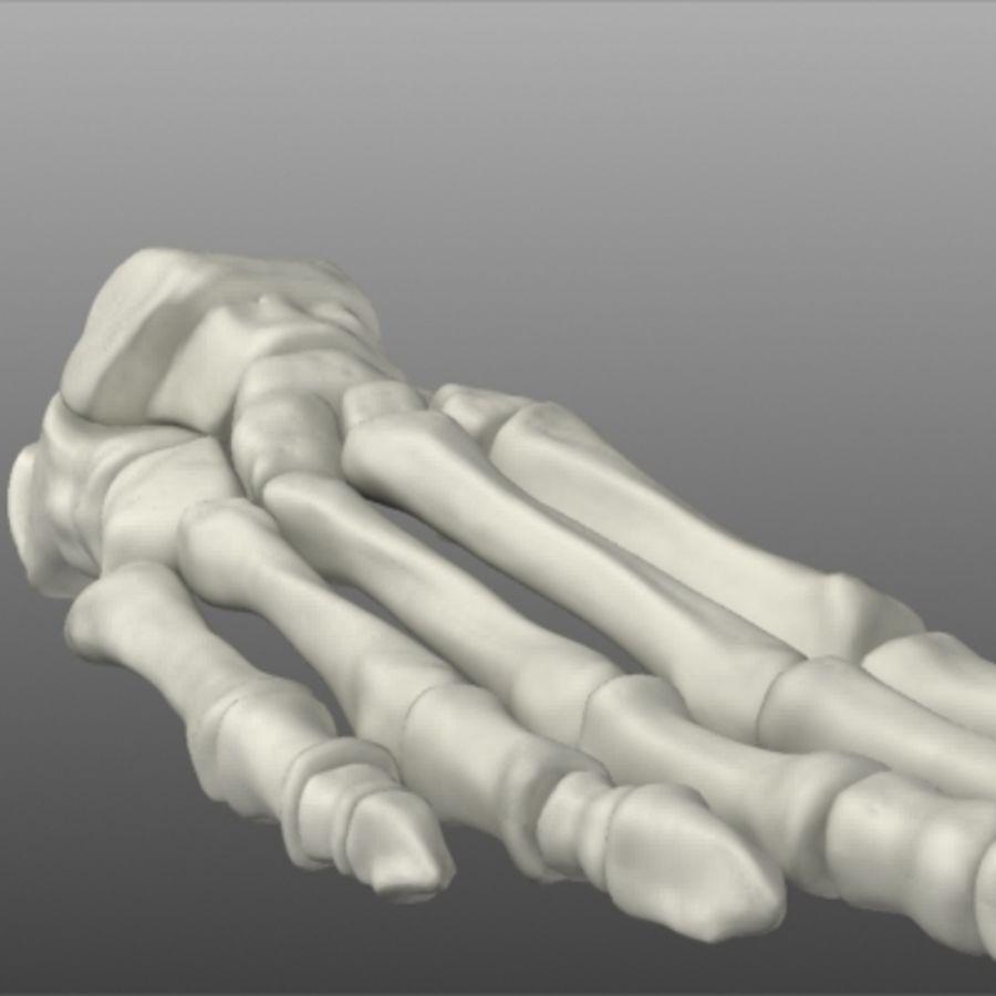 Huesos del pie humano royalty-free modelo 3d - Preview no. 13