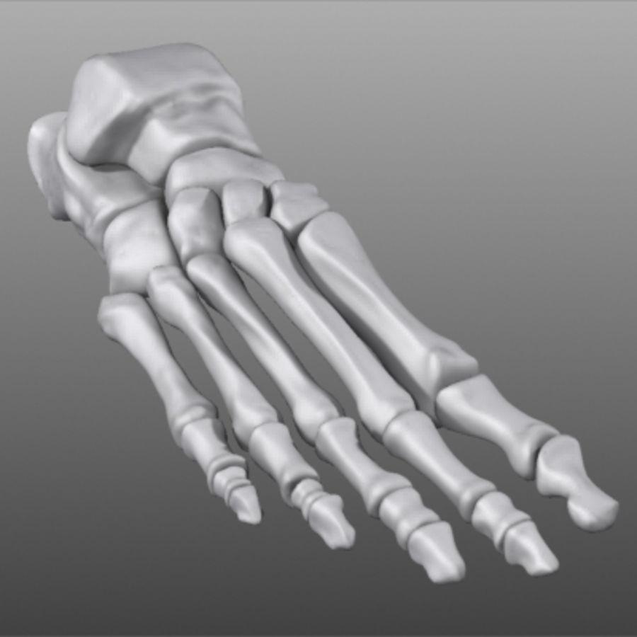 Huesos del pie humano royalty-free modelo 3d - Preview no. 11