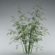 Bamboo_garden_bush_01 3d model