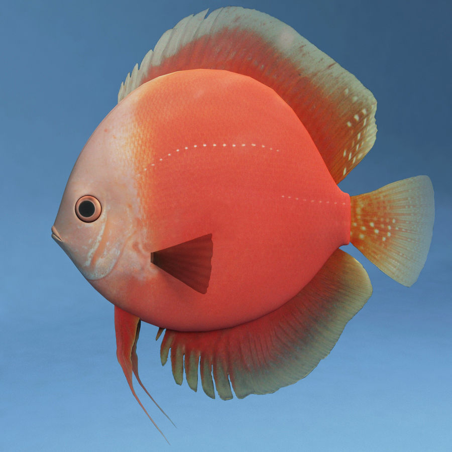 Diskus Red royalty-free 3d model - Preview no. 2