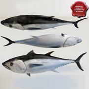 Tuna 3d model
