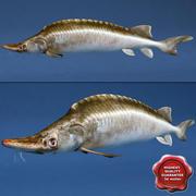mersin balığı 3d model
