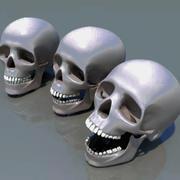 crâne humain 3d model