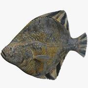 Flatfish 3d model