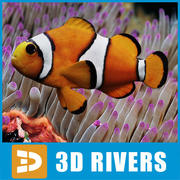 Clown fish by 3DRivers 3d model