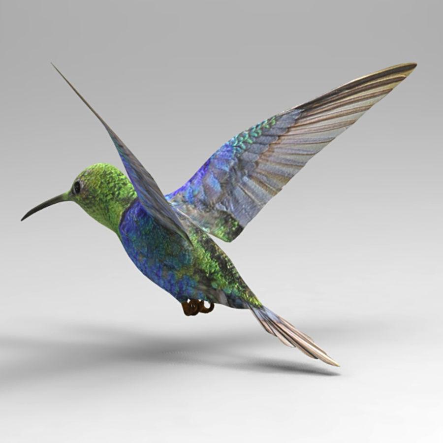 Kolibri royalty-free 3d model - Preview no. 3