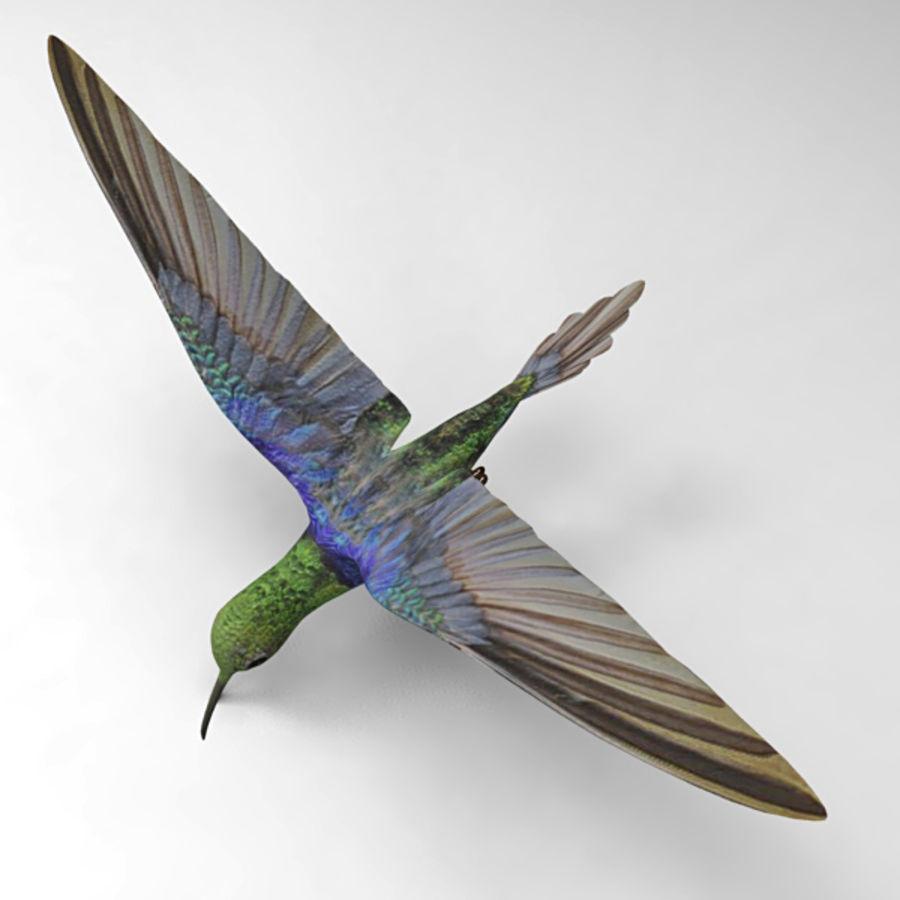 Kolibri royalty-free 3d model - Preview no. 5