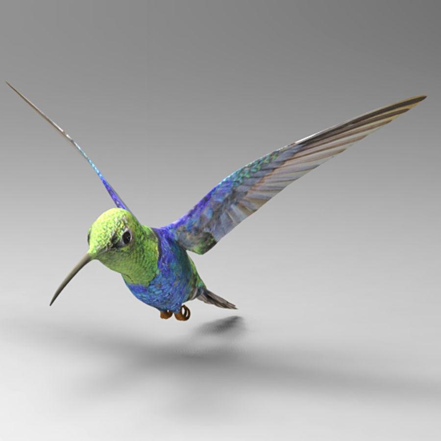 Kolibri royalty-free 3d model - Preview no. 2