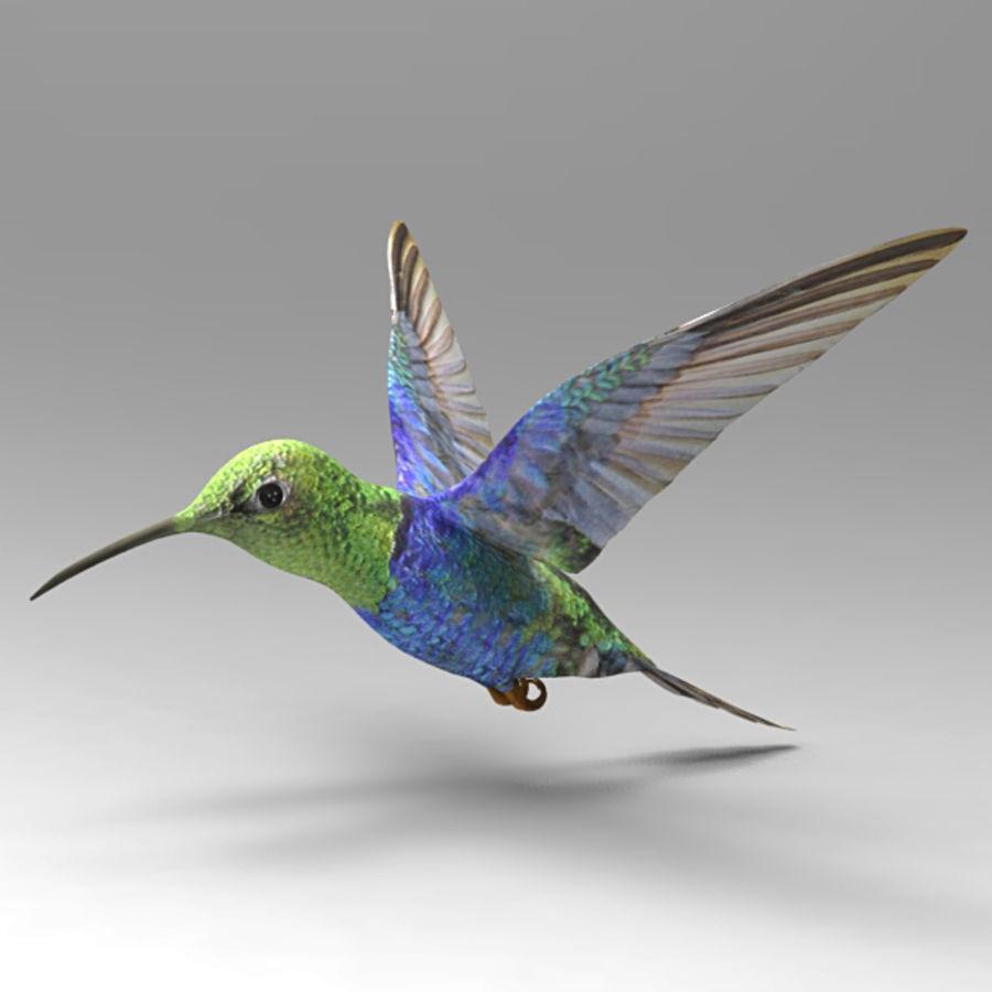 Kolibri royalty-free 3d model - Preview no. 1