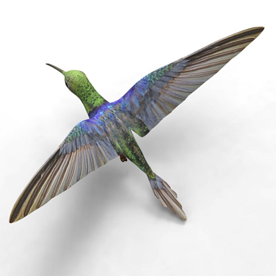 Kolibri royalty-free 3d model - Preview no. 4