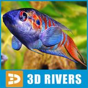 Rajska ryba 3DRivers 3d model