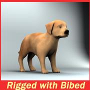 köpek yavrusu 3d model