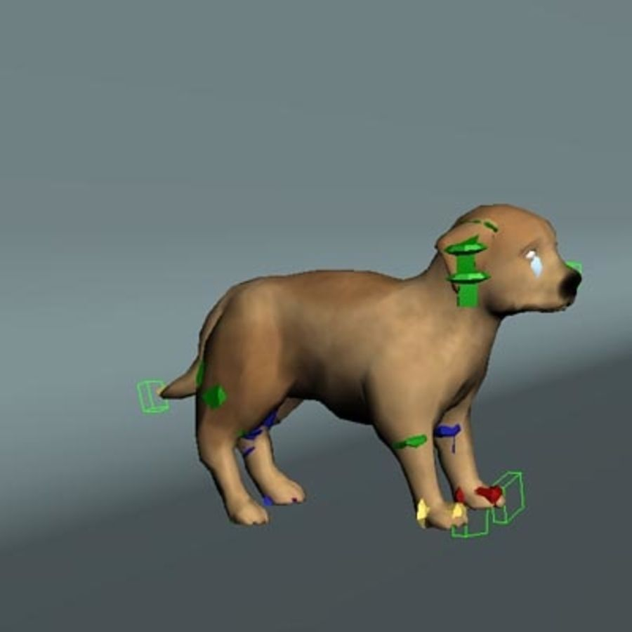 cucciolo royalty-free 3d model - Preview no. 6