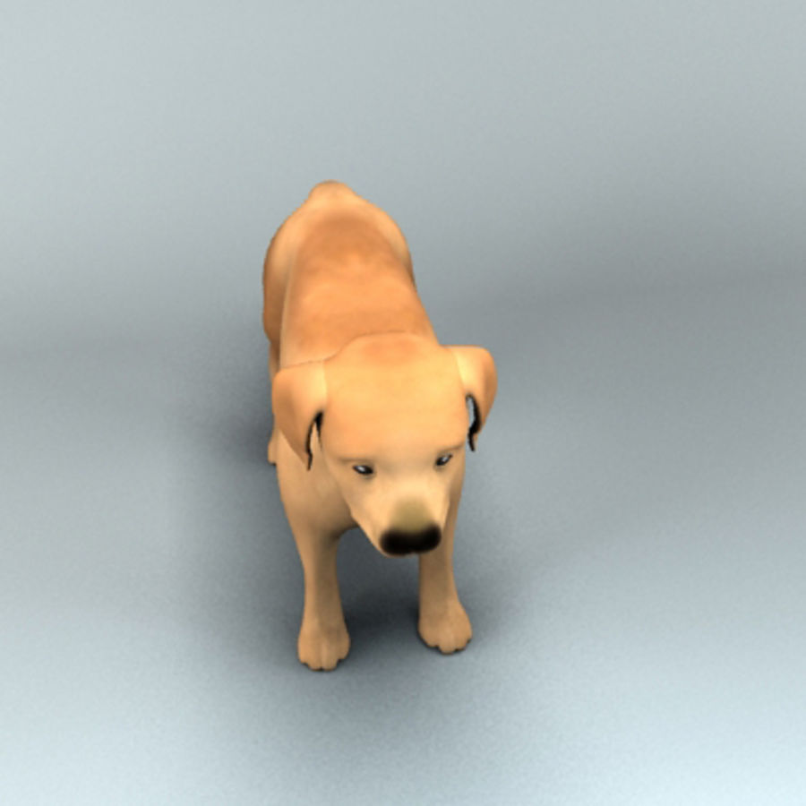 cucciolo royalty-free 3d model - Preview no. 4