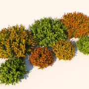 Växt Nandina Bush 3d model