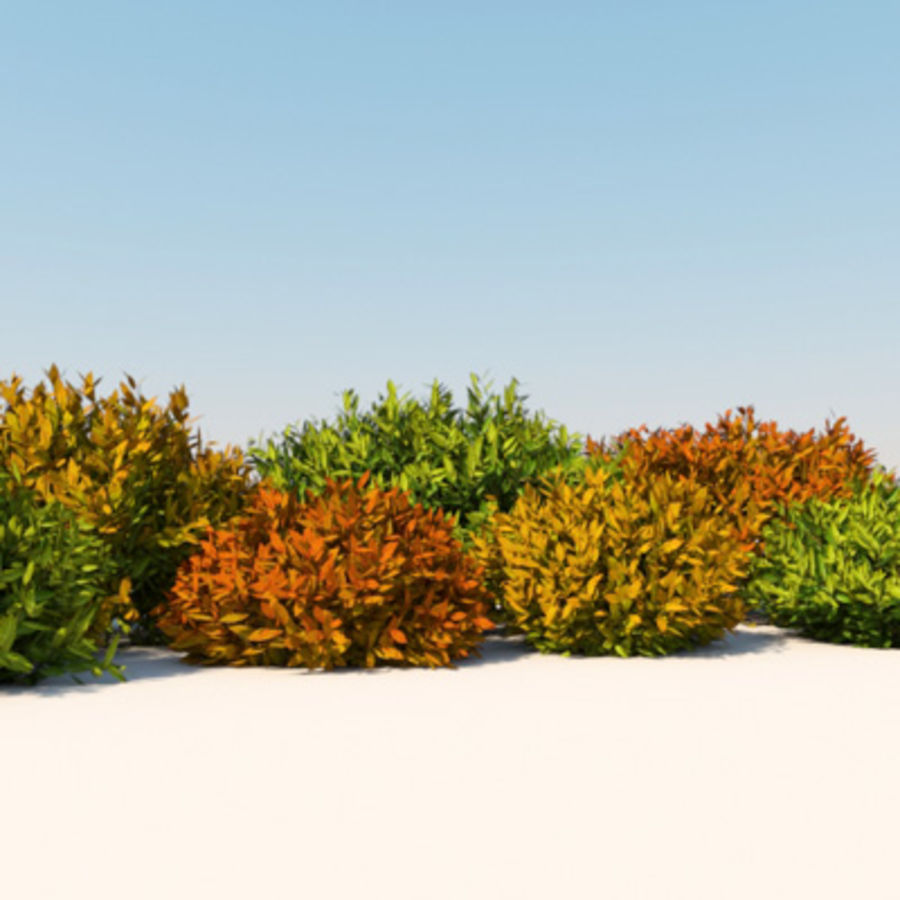 Växt Nandina Bush royalty-free 3d model - Preview no. 3