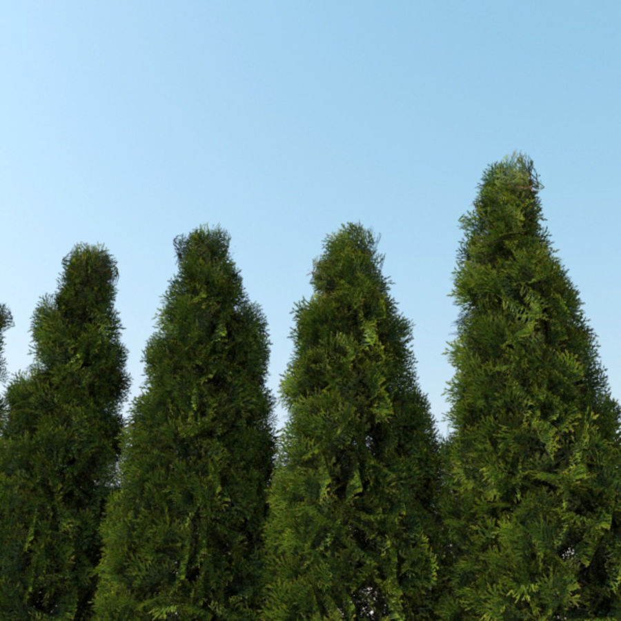 Plant Cedar Bushes royalty-free 3d model - Preview no. 5
