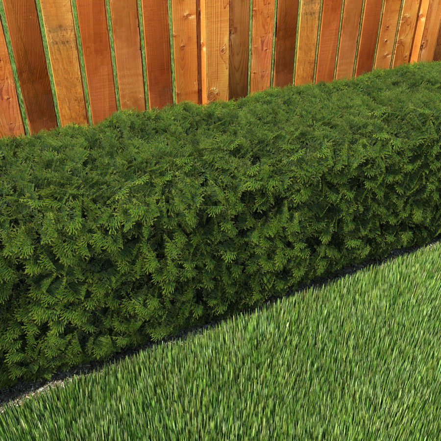 Plant Cedar Hedge royalty-free 3d model - Preview no. 3