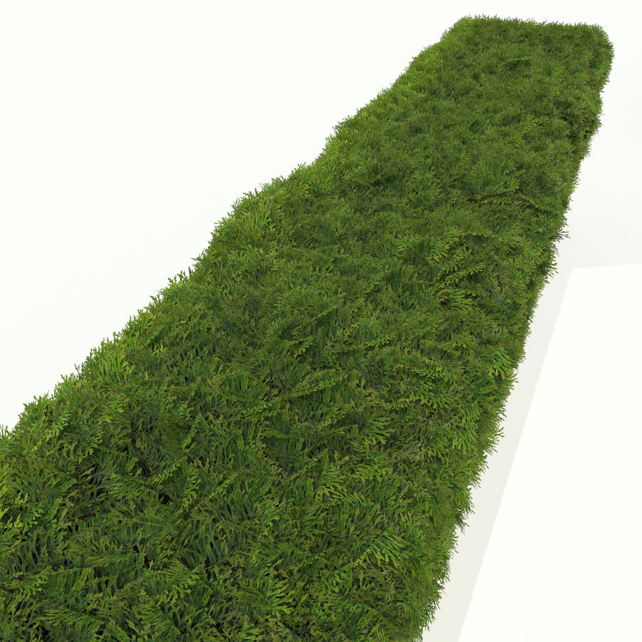 Plant Cedar Hedge royalty-free 3d model - Preview no. 5