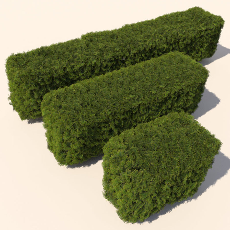 Plant Cedar Hedge royalty-free 3d model - Preview no. 1
