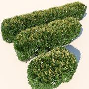 Haie floraison des plantes 3d model