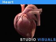 Сердце 3d model