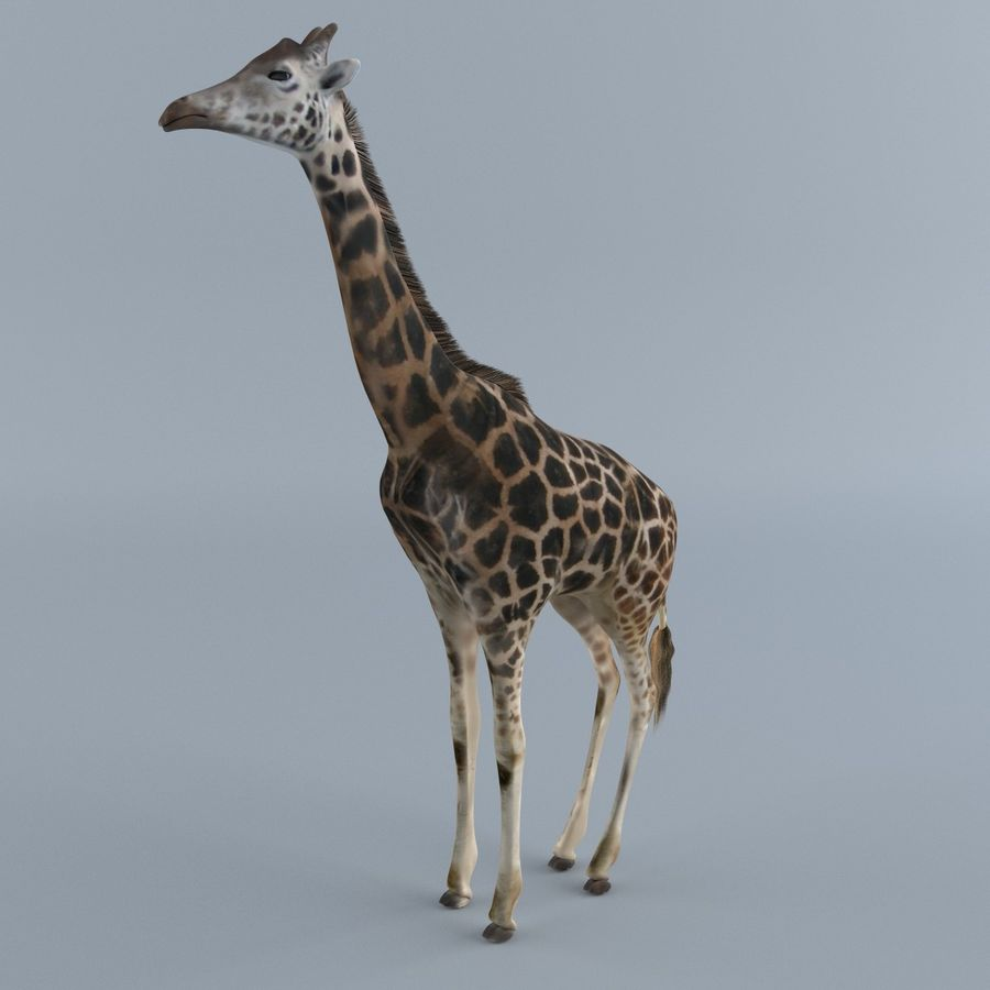 Giraffe 3D Model $39 -  unknown  max  w3d  stl  fbx  dae  wrl  obj