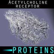 Receptor de acetilcolina modelo 3d