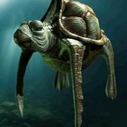 アカウミガメ 3d model