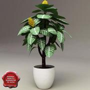 斑马植物(Aphelandra Squarrosa) 3d model