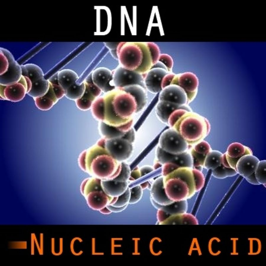 DNA royalty-free 3d model - Preview no. 1