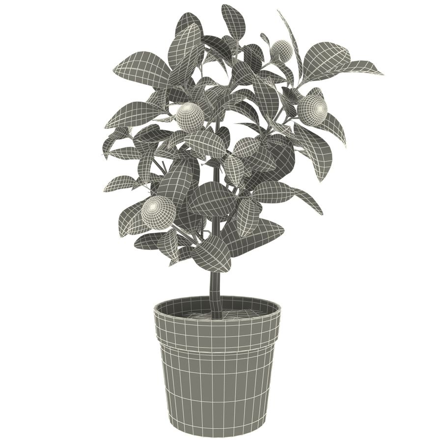 Decorative citrus tree Calamondin royalty-free 3d model - Preview no. 9