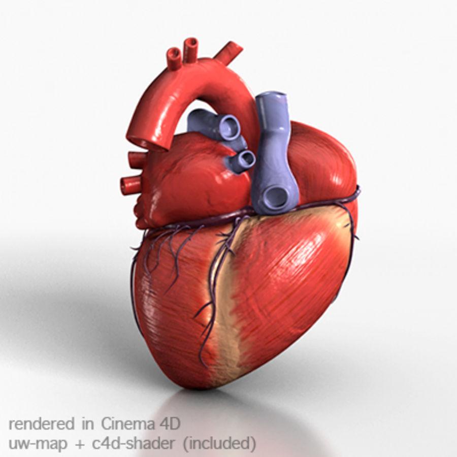 mänskligt hjärta royalty-free 3d model - Preview no. 1